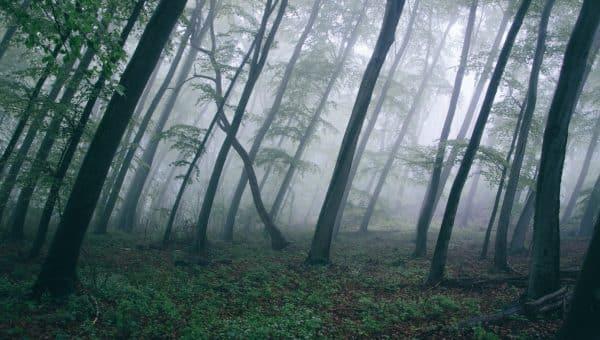 Spiritualité: qu'est-ce que le chamanisme?